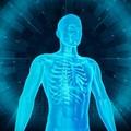 Mikor optimális étrendünk esszenciális zsírsav tartalma?