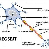 Omega 3 kiegészítés táplálkozási hiányosságok pótlására