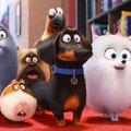 A kis kedvencek titkos élete 2 teljes film magyarul online