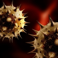SEO vírus