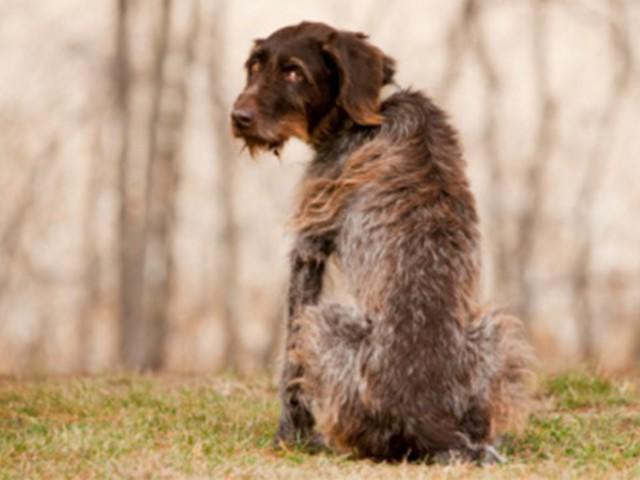 A kutya epilepszia és kezelési lehetőségei