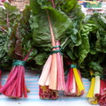 Pancs - Gasztro Placc: egy vadonatúj pesti közösségi piac!