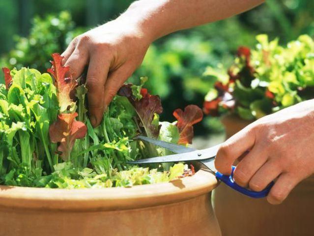 Zöldséget az erkélyedre!