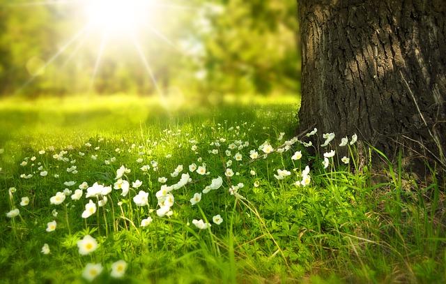 spring-276014_640.jpg