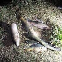 Több száz kilónyi elpusztult hal látványa fogadta a tulajdonost