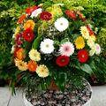 Ötletek, hogy milyen virágot válasszunk szeretteinknek