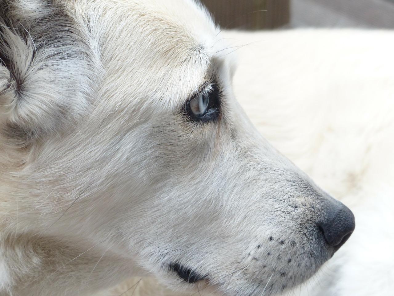 dog-186222_1280.jpg