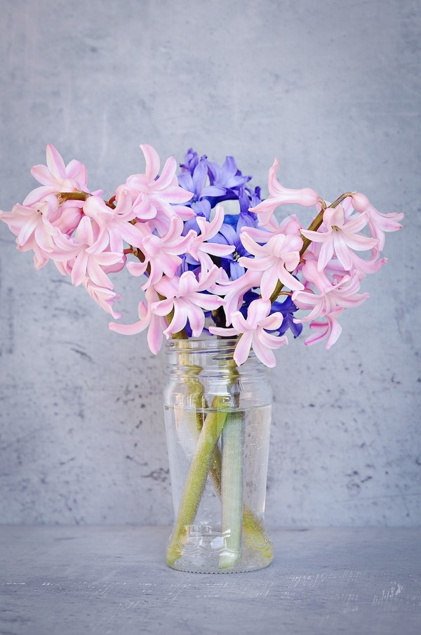 hyacinth-1387218_1280_2.jpg