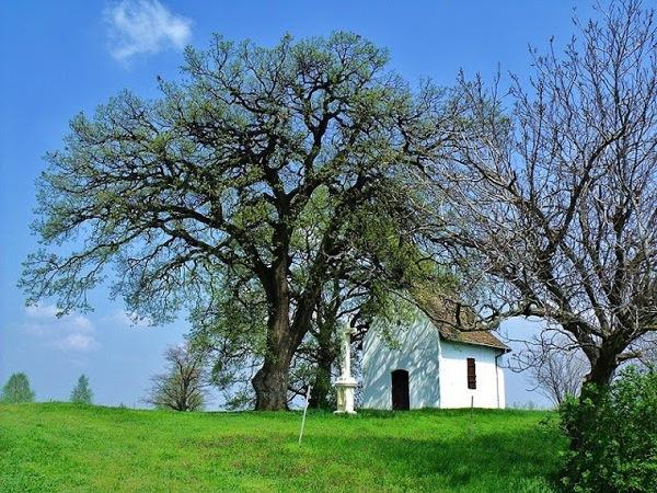 Az Év fája 2015