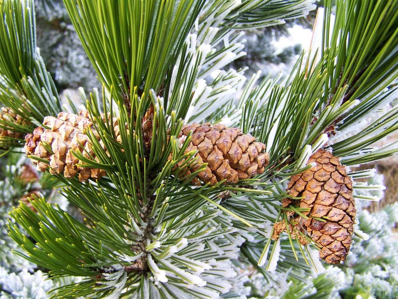 winter-1981190_1280.jpg