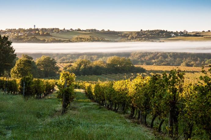 bordeaux_vineyard_market_3.jpg