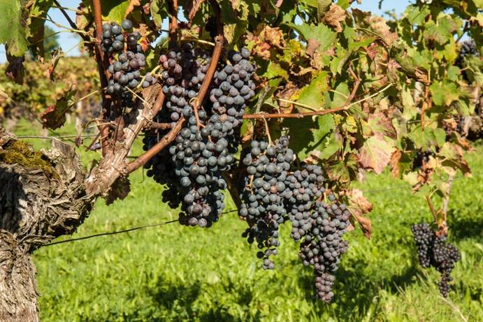 bordeaux_vineyard_market_4.jpg