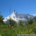 Cross du Mont-Blanc et Marathon du Mont-Blanc