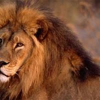Közmondások, szólások állatokról