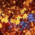 Itt az ősz!-Őszi ötletek ovisoknak