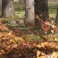 Őszi tarisznya:őszi mondókák és rigmusok