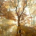 Őszi tarisznya: őszi gyermekversek óvodásoknak