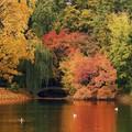 Milyen őszi versekkel ismertessük meg óvodás korú csemeténket?