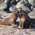 Galápagos-szigetek II: Az állatok világa