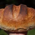 Az új kenyér ünnepe? Süssük magunk!