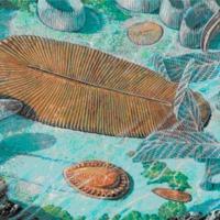 Kaotikus evolúciós dinamika a (pre)kambriumban