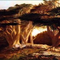 Az elhajózott erdő
