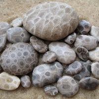 5 perc geológia - Jégbefagyott korallok