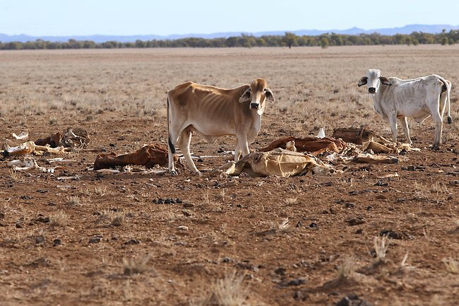 cattle-live-exports-colwell-station.jpg