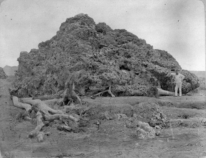 collectie_tropenmuseum_groot_brok_koraal_uit_zee_dat_bij_anjer_op_land_is_geworpen_na_de_uitbarsting_van_de_krakatau_in_1883_tmnr_60005541.jpg