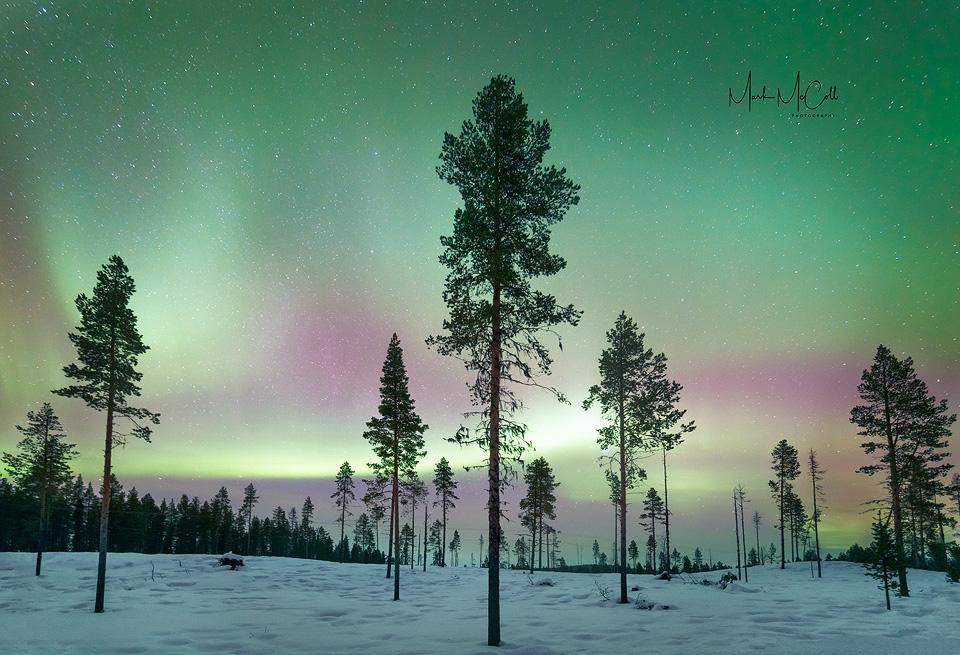 forest_aurora2.jpg