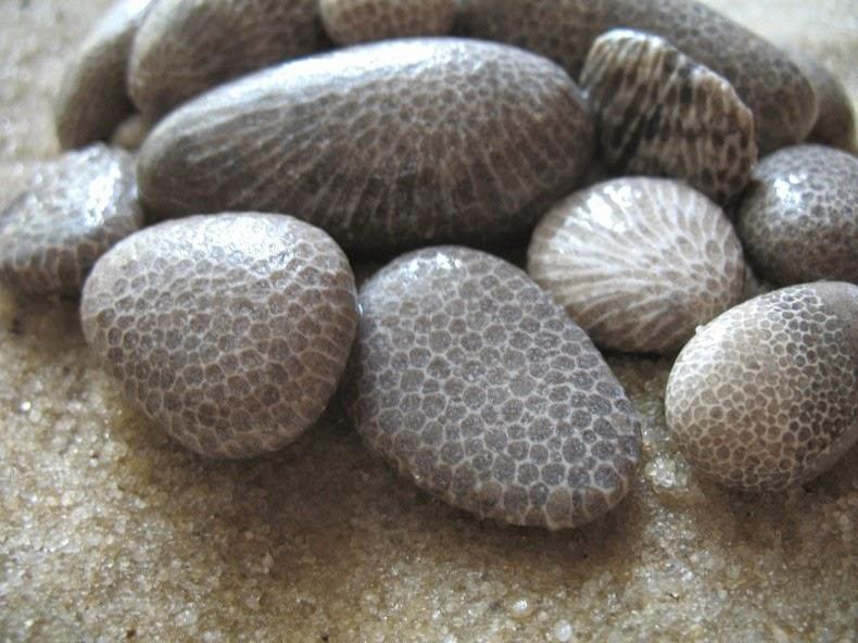 petoskey-stones-3_2.jpg