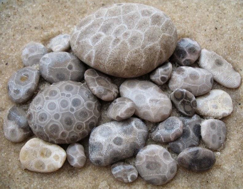 petoskey-stones-4_6.jpg