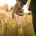 Nem könnyű eligazodni a mezőgazdasági biztosítások között