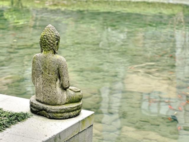 Kis Buddha társat keres