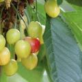 Néha a türelem is érleli a gyümölcsöt