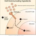 Mi kell a bőrnek 2 - Sejtjelző anyagok