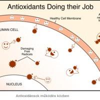 Mi kell a bőrnek 1 - Antioxidánsok