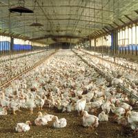 Gázkimaradás esetén tragédia is érheti az állattenyésztőt