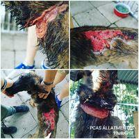 Állatkízó gazdák #masemunatkoztunk #rescuedogs #gyepmesteritelepről  #rossztartás
