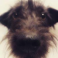 #dogs #pcasdogrescue  #dogsareangels