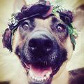 Tinka  #fogadjörökbe  #adopt