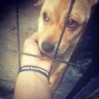 #gyepmesteritelep  #tötungstation  #rescuedogs