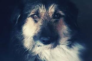 Benny #fogadjörökbe  #adoptdontshop  #pcas  pcas.rescue@gmail.com