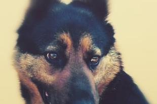 Sandora  #fogadjörökbe  #adoptdontshop  #pcas  pcas.rescue@gmail.com