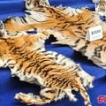 Több száz, vadállatokból származó tiltott árut foglaltak le Kínában - 10 éve nem volt ekkora fogás