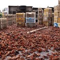 Több ezer rák szökésben egy kínai autópályán