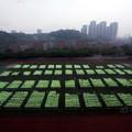 Szentjánosbogárként világítottak a diákok egy kínai egyetemen
