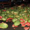 500 dinnye került Tajvanban az úttestre