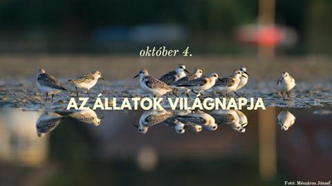 vilagnap.png