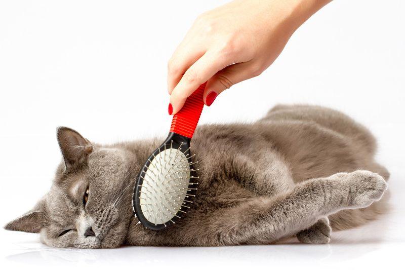 Macska szőrének ápolása